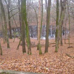 Wycieczka do kompleksu poświęconego meteorytowi Morasko - 23.11.2014
